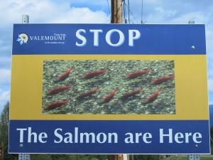 Salmon sign