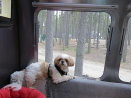 Daisy lounging