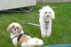 Daisy and Sundance (RIP2014)